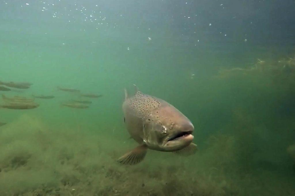Eel River Story