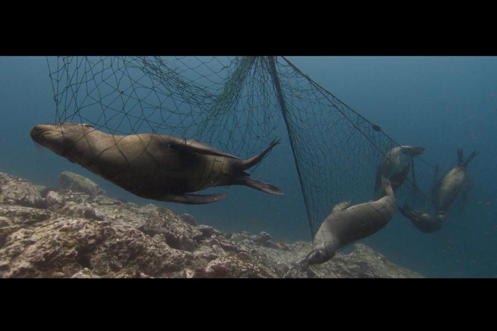 Battle for the Ocean