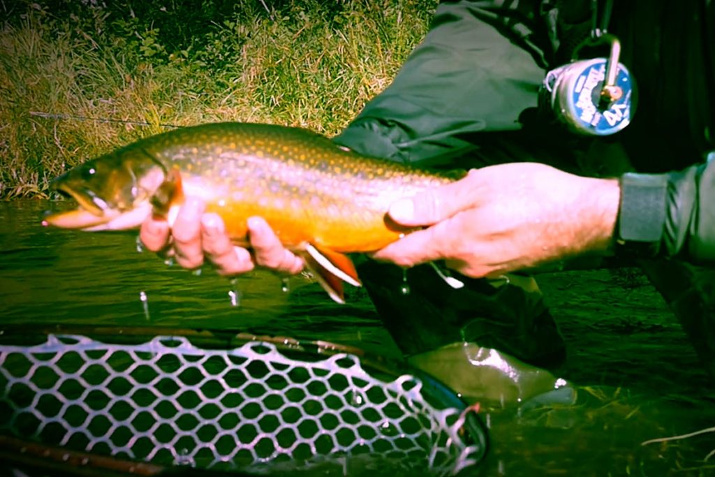 Fly Fishing Dreams
