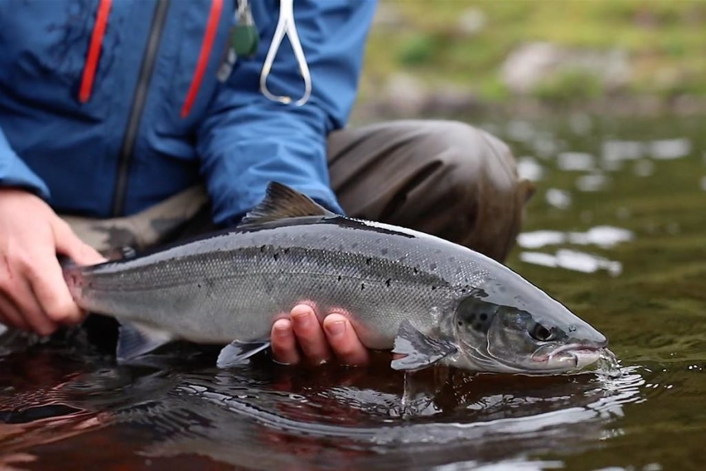 North Scotland Fly Fishing